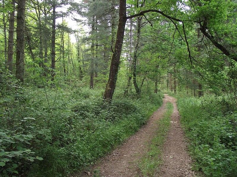 Forêt de Clarens (Hautes-Pyrénées, France)