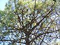 Forêt de la Coubre 018.jpg