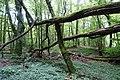 Forest @ Roc de Chère @ Talloires (35645765875).jpg