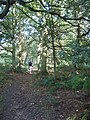 Forest Path - geograph.org.uk - 1022080.jpg