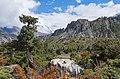 Forest in Marsyangdi valley - Annapurna Circuit, Nepal - panoramio.jpg