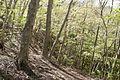 Forest in Mt.Myo 03.jpg
