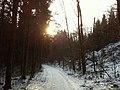 Forest near Härkingen, Weidban, Niederban - panoramio.jpg