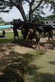 Fuerzas Comando 2012 120604-A-UC781-191.jpg