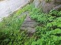 Fukushima, Shirakawa, Ono District, Gifu Prefecture 501-5504, Japan - panoramio.jpg