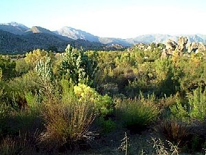 Heath - Fynbos heathland, South Africa