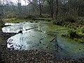 GOC Historic Stevenage 044 Pond in Monks Wood, Stevenage (27134964220).jpg