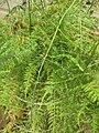 Gardenology.org-IMG 7600 qsbg11mar.jpg