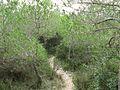 Garraf Naturpark 2.jpg