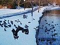 Geese (406346550).jpg