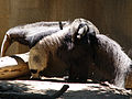 Giant Anteater with child.jpg