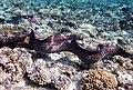 Gigantische Muräne im Roten Meer..DSCF3621BE2.jpg