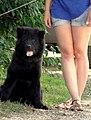 Girl and her dog - Flickr - Stiller Beobachter.jpg