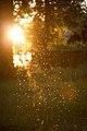 Glitterflies (5893703728).jpg