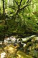 Golitha Falls (4021).jpg
