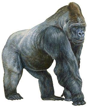 Ape - 60 px