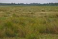 Grünland des Nabu Wasservogelreservates Wallnau Fehmarn.jpg