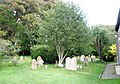 Gravestones behind Bosham church - geograph.org.uk - 928592.jpg