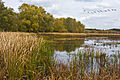 Great Meadows National Wildlife Refuge 2011-10-24 (edited).jpg