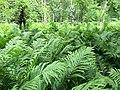 Green - panoramio (50).jpg