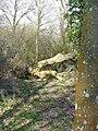Green Lane, by Kingsley - geograph.org.uk - 340517.jpg