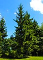 Green tree2.jpg
