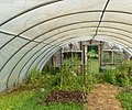Greenhouse-7 (cropped).jpg