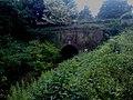 Greywell Tunnel with summer foliage growth - geograph.org.uk - 1639200.jpg