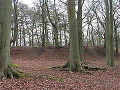 Grimsbury Castle, Iron Age Hill Fort - geograph.org.uk - 886.jpg