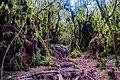 Gunung Irau (The Mossy Forest) (25582962393).jpg