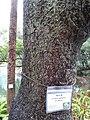 HK ML 半山區 Mid-levels 堅尼地道 Kennedy Road 香港公園 Hong Kong Park flora green leaves February 2020 SS2 11.jpg
