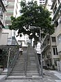 HK Sheung Wan 磅巷 Pound Lane outdoor ladder stairs tree Aug-2010.JPG