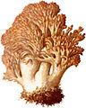 Hahnenkamm-1.jpg