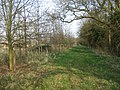 Hampshire countryside in spring - geograph.org.uk - 1240550.jpg