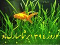 Happy norouz and goldfish.JPG