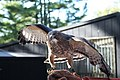 Hawk shaver Creek environmental center - panoramio.jpg