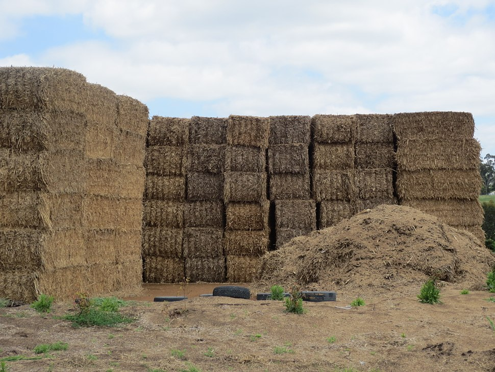 Hay bales more outside stack showing stack size near Yass Australia photo taken November 2015 03