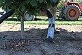 Hazelnut harvest.jpg