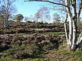 Heathland on Yagden Hill - geograph.org.uk - 272453.jpg