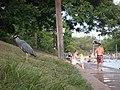 Heron at Barton Springs - panoramio.jpg