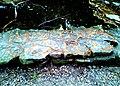 Hidden Falls - St Paul, MN - panoramio (45).jpg