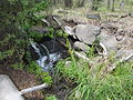 High Desert Museum, Oregon (2013) - 37.JPG