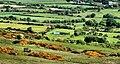 Hill country near Castlerock (4) - geograph.org.uk - 1911747.jpg