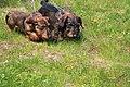 HiperParada animalelor la CORA (4549107866).jpg