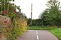 Hollyhocks in Hunningham - geograph.org.uk - 1480904.jpg
