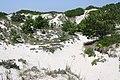 Horseneck Beach State Reservation - Westport, MA - panoramio (16).jpg