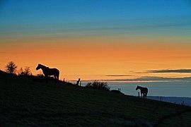 Horses at sunset Okeford Hill - geograph.org.uk - 373239.jpg