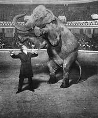 Houdini e um elefante (1918)