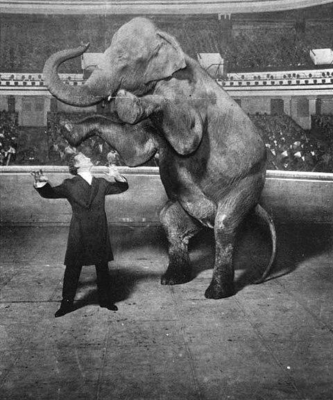 480px-Houdini-Elephant.jpg