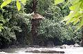 House on Tree ( Earumadam).jpg